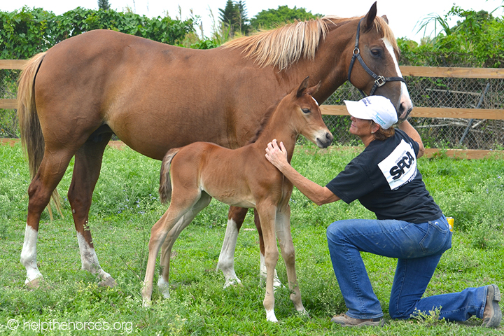 Cindy_Bling-Julie_©helpthehorses.org