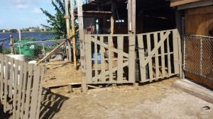 "The two Paint horses were found inside this ""stall,"" which was nailed shut."