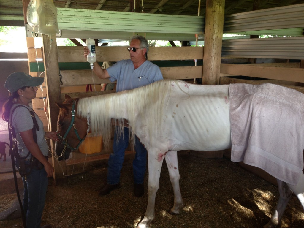 Veterinarian Dr. Zachary Franklin tends to Susie, the rescued paint mare.