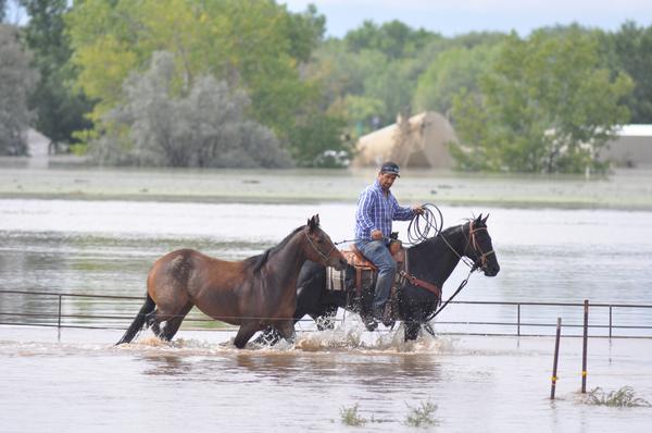 20130913__greeley-flood-horses~p1