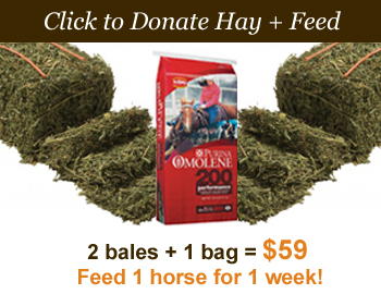 Donate_2hayand1feed