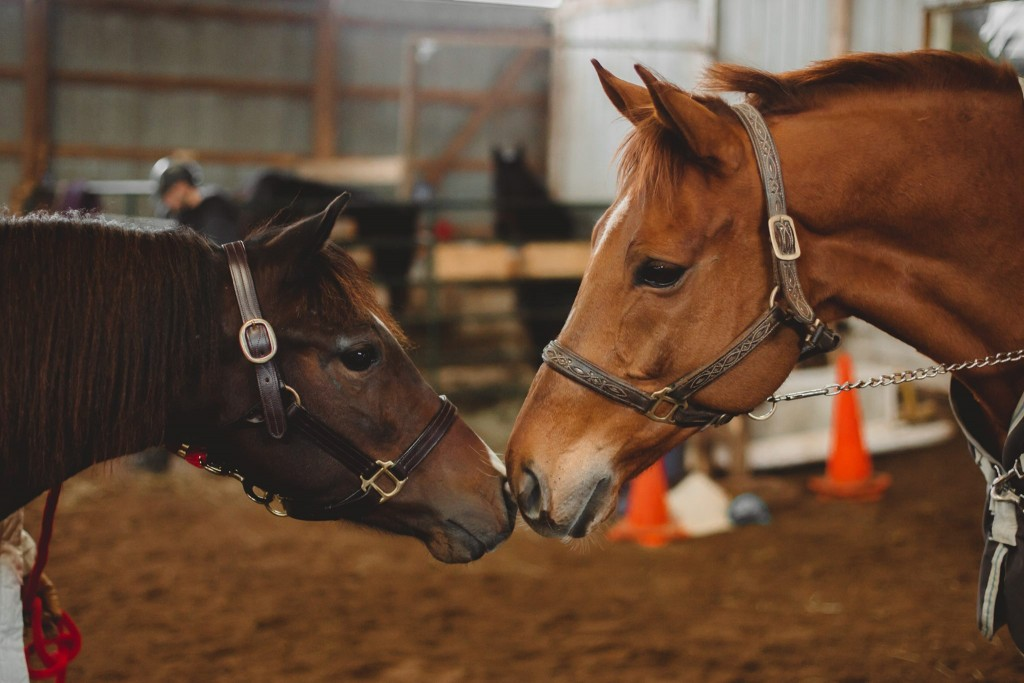 """You're going to like it here."" SFSPCA rescues Amazing Grace and Prodigioso meet for the first time. Photo ©Rachel Sulman Photography."