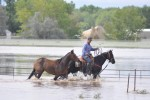 Greeley resident Tommy Meyer leads one of his horses to safety as flood waters from the South Platte River swamped his farm at 22378 Highway 34 east of Greeley on Sept, 13, 2013. Photo by Doug Conarroe, North Forty News
