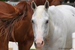 Anti-HorseSlaughter_DSC_3462
