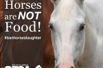 HorsesAreNotFood