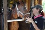SFSPCA Horse Evacuation 0907_AL DIAZ MIAMI HERALD