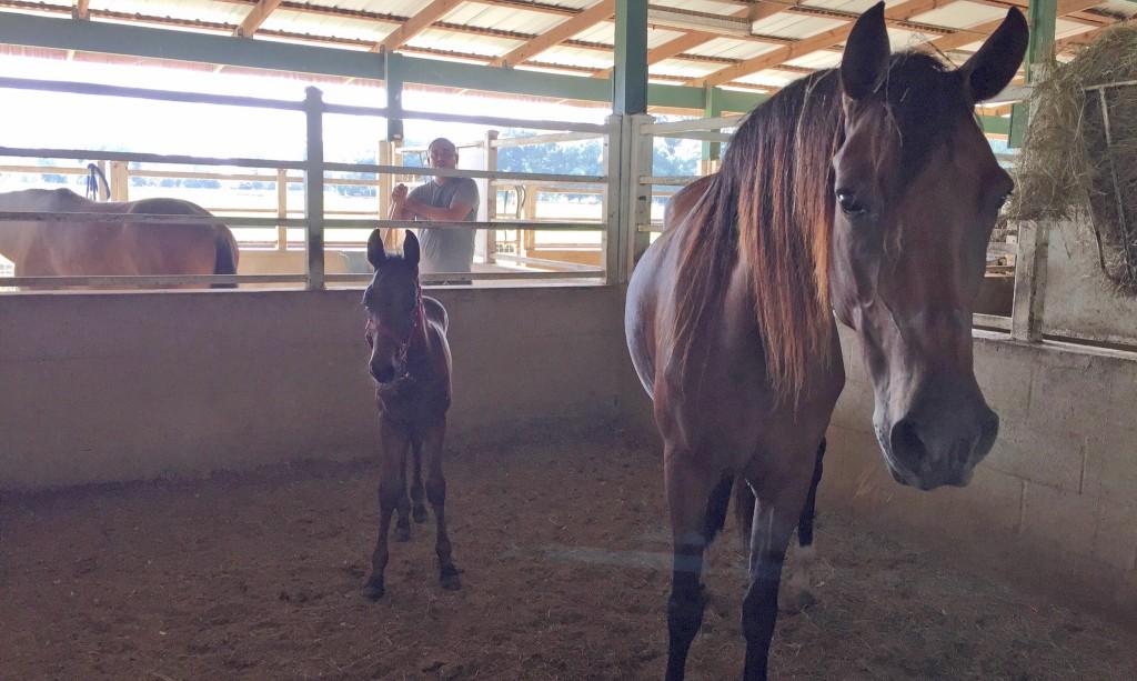 SFSPCA Horses Safe_Hurricane Irma