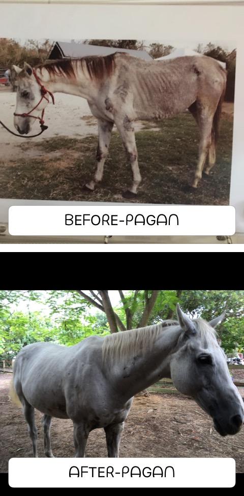 Pagan transformation_IMG_4687