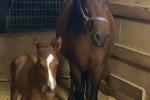 Shakira-foal