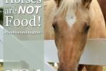 SouthFloridaSPCA-HorsesAreNotFood