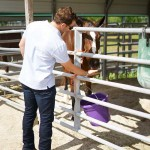 South-Florida-SPCA-Farm-to-Stable-DSC08442