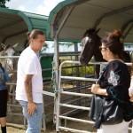South-Florida-SPCA-Farm-to-Stable-DSC08455