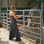 South-Florida-SPCA-Farm-to-Stable-DSC08457