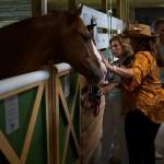 South-Florida-SPCA-Farm-to-Stable-DSC08483