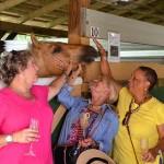 South-Florida-SPCA-Farm-to-Stable-DSC_7669