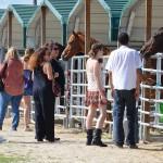 South-Florida-SPCA-Farm-to-Stable-DSC_7693