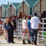 South-Florida-SPCA-Farm-to-Stable-DSC_7694
