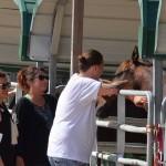 South-Florida-SPCA-Farm-to-Stable-DSC_7708